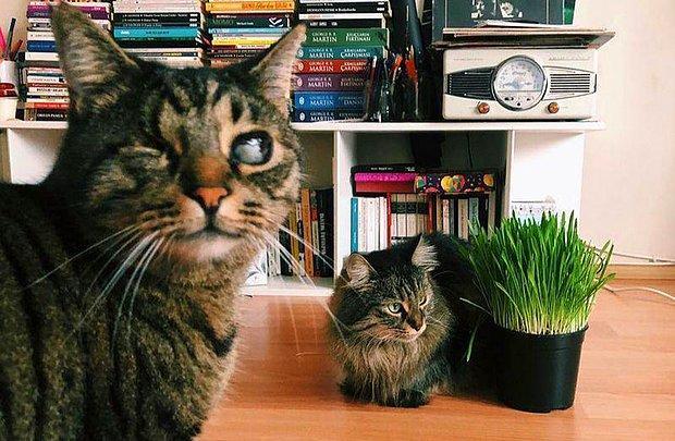 'Kedilerin Velayeti' Davasında Emsal Karar: 'Piraye' ve 'Cingöz'ün Psikolojileri de Gözetildi