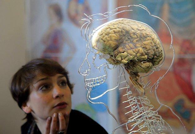 Bilim İnsanları, Sosyalleşmenin Başlamasıyla İnsan Beyninin 3 Bin Yıl Önce Küçülmeye Başladığını Tespit Etti