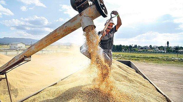 Buğdaydan Nohuta! Kuraklık Nedeniyle Birçok Üründe Üretim Azalışı Bekleniyor