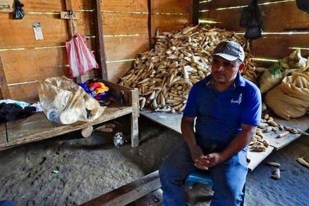 Küresel Isınma Guatemala'da Tarımı Yok Etti: 'Hiçbir Şeyimiz Kalmadı...'